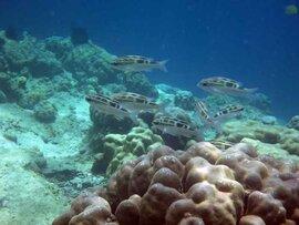 スマトラ島沖ウェー島:中途半端な楽園イボイの休日。