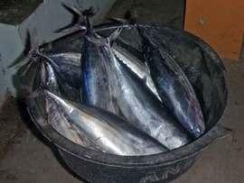 スマトラ島沖ウェー島:島めしはやはり魚がうまい。