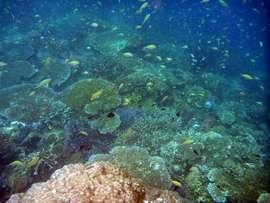 舟をチャーターしてシュノーケリング。なかなかに美しい珊瑚礁があります。
