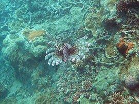 フィジー(ヤサワ諸島)個人旅行 2010年7月