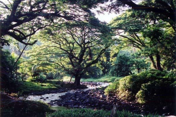 ガーデンアイランド:タベウニ島。森と水が豊富な島です。