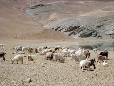 インド個人旅行(ラダック) 2004年8月