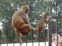 JALのパンを捨てた猿