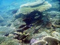 オンドゥン湾の水中写真1