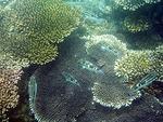 オンドゥン湾の水中写真2