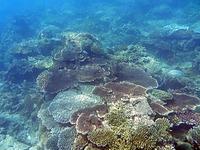 コンダオ島周辺の水中写真1