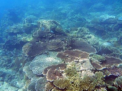 コンダオ島の海:ボートでシュノーケリングも同乗者がはずれ。