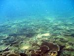 コンダオ島周辺の水中写真3