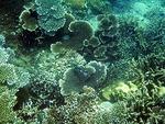 コンダオ島周辺の水中写真5