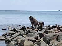 海岸に降りてきてる猿