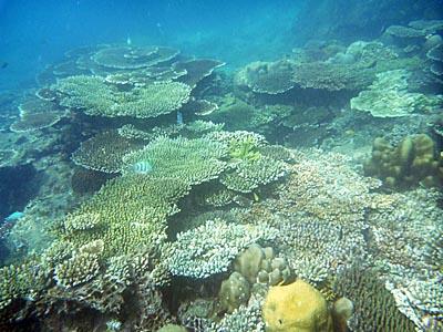 コンダオ島周辺の海の中1